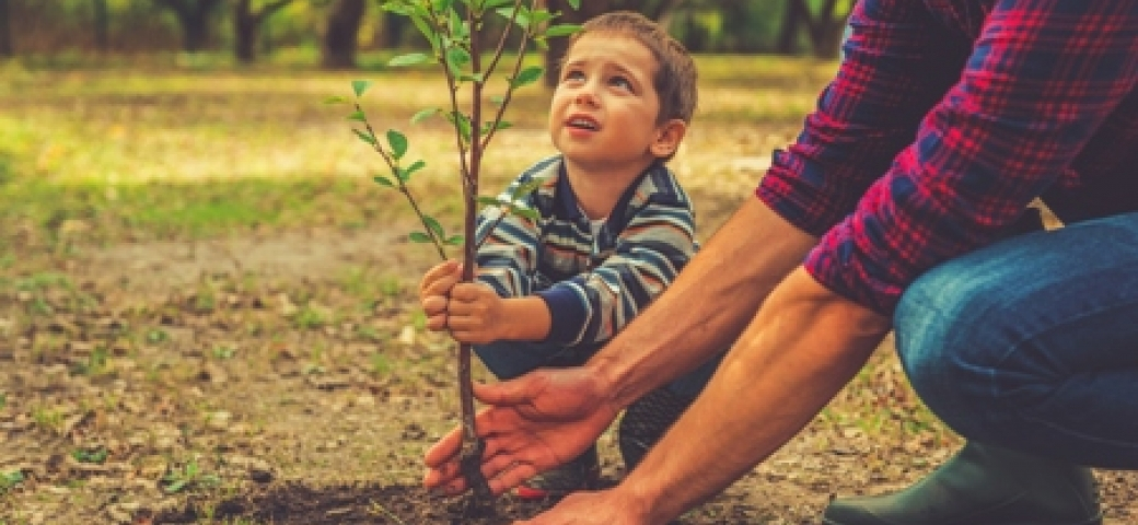 boy planting tree with help from adult