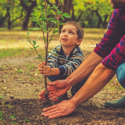 boy planting tree with adult helping