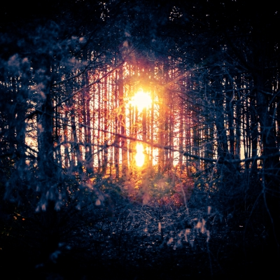 dark forest with sun shining through