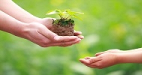 plant seedling being passed to young persons hands