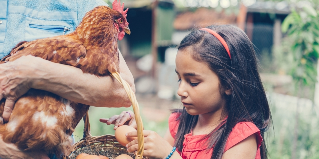 person holding chicken and basket of eggs, little girl taking egg out of basket